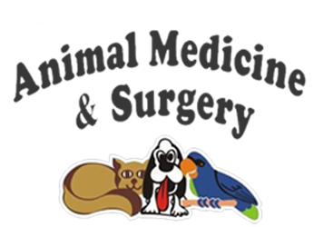 Animal Medicine Surgery Of Little Neck Veterinarian In Little